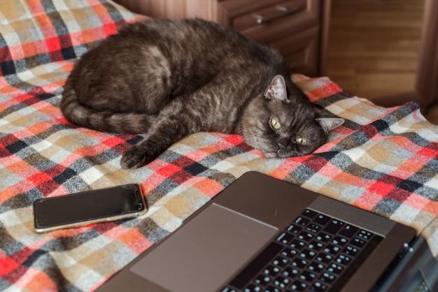 Il gatto divertente finge di usare il computer portatile