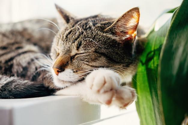 Il gatto dorme sulla finestra