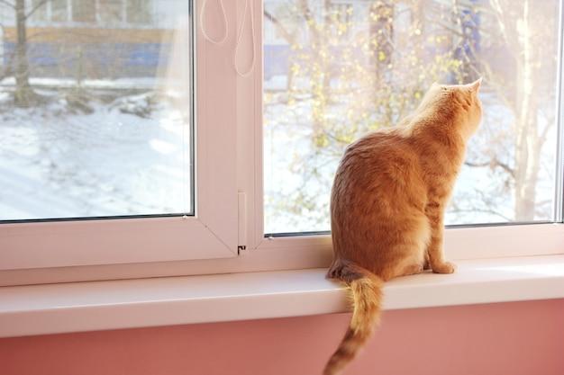 Il gatto è seduto sul davanzale della finestra e guarda la prima neve