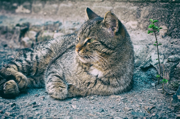 Il gatto grigio è disteso a terra