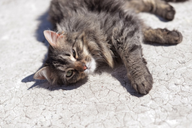Il gatto grigio si trova sulla strada