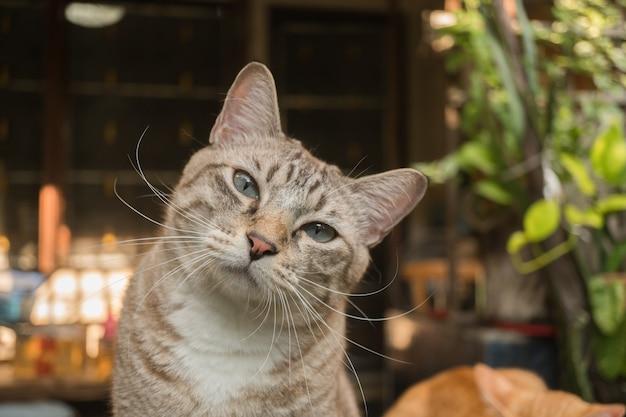 Il gatto in giardino sta guardando in alto.