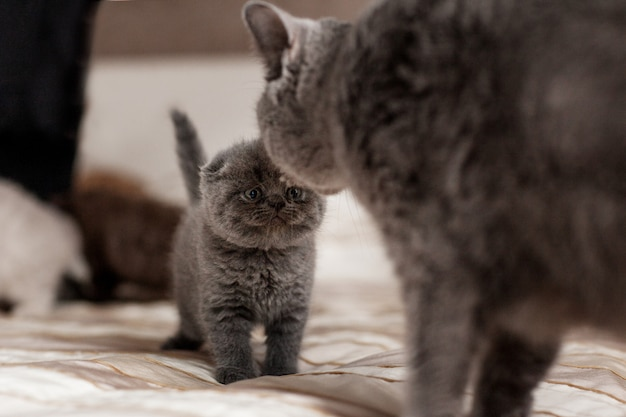 Il gatto lecca il suo bellissimo gattino