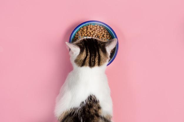 Il gatto mangia da una ciotola