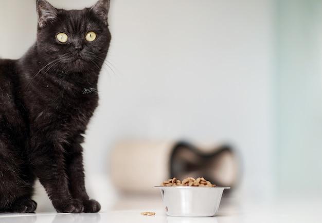 Il gatto marrone sveglio mangia l'alimento secco sul pavimento della cucina