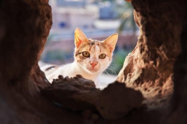 Il gatto nella città di ghardaia, deserto del sahara, algeria