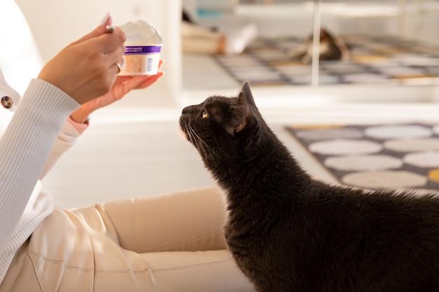 Il gatto nero chiede cibo dal suo proprietario che mangia yogurt
