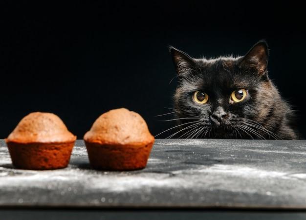 Il gatto nero guarda i cupcakes sdraiato sul tavolo. messa a fuoco selettiva.