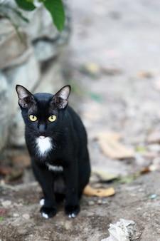 Il gatto randagio sta cercando cibo, gatto di strada