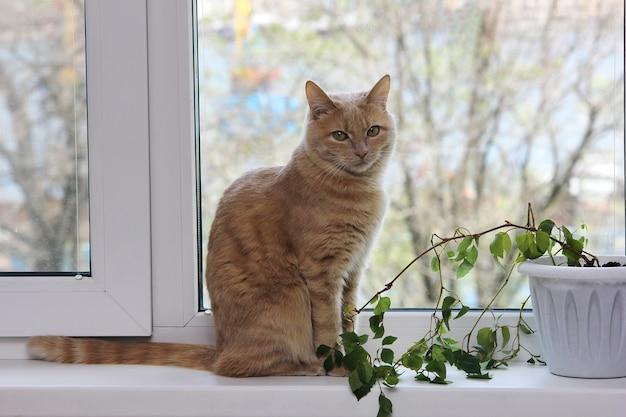 Il gatto rosso si siede sul davanzale della finestra accanto alla pianta della casa. allergeni in casa.