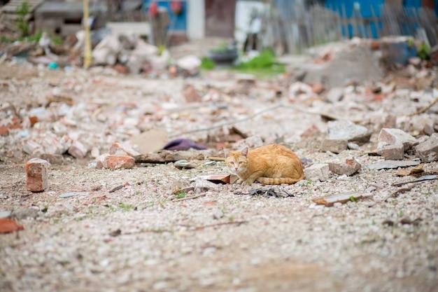 Il gatto rosso si trova in rovina. rovine di case, mattoni, rovine.