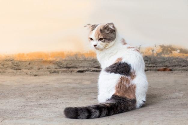 Il gatto si distende sul pavimento, gatto marrone e gatto bianco