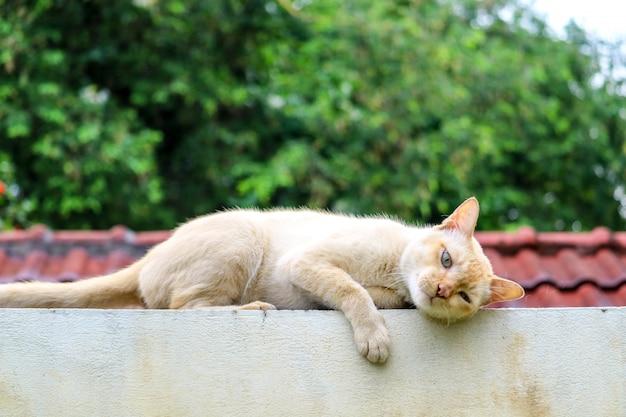 Il gatto si rilassa sul fondo ralaxing del giardino del tetto del muro di cemento