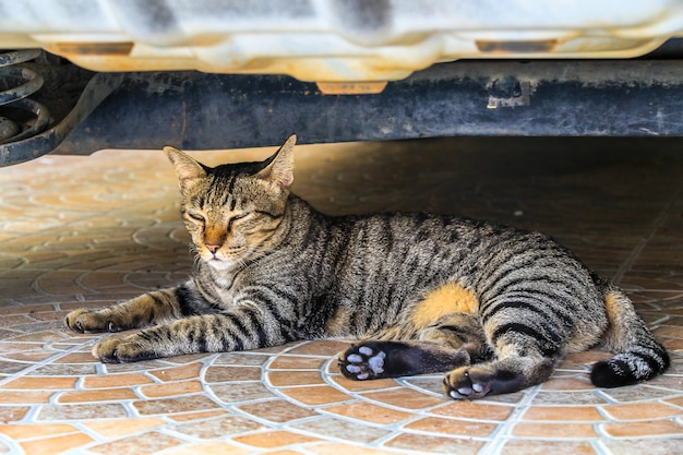 Il gatto si rilassa sul pavimento sotto la macchina