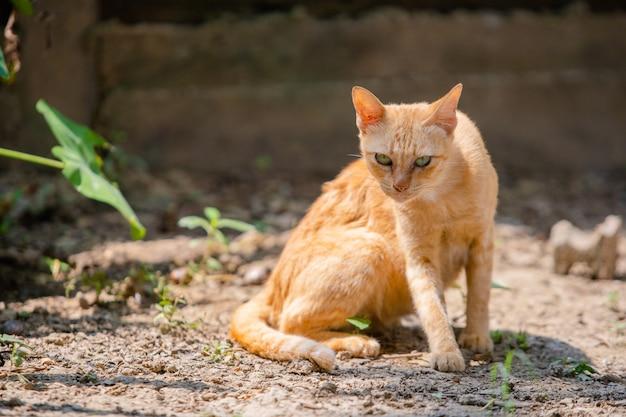 Il gatto si siede pensando