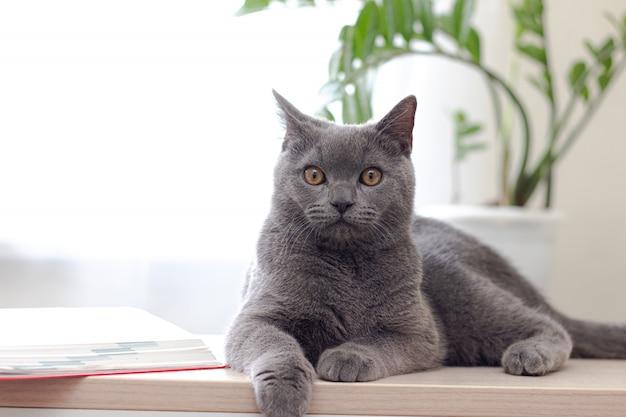 Il gatto si trova su un tavolo luminoso vicino a una finestra con un fiore. il gatto vicino alla finestra.