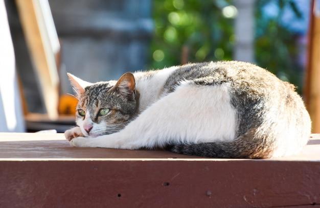 Il gatto sta fissando qualcosa. solo gatto seduto per terra