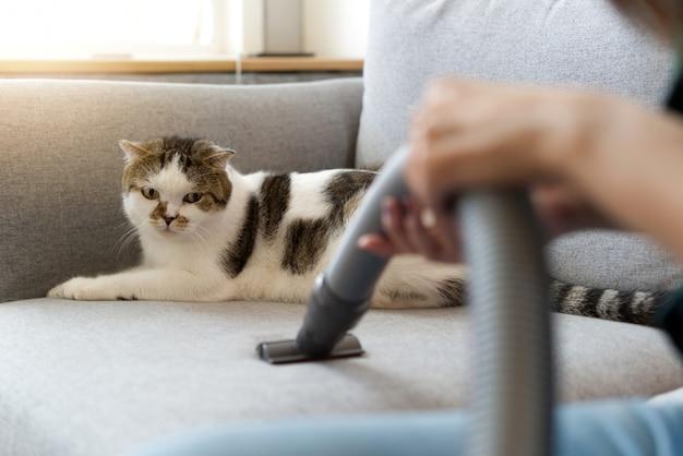 Il gatto sveglio bianco che si siede sul sofà sta esaminando l'aspirapolvere.