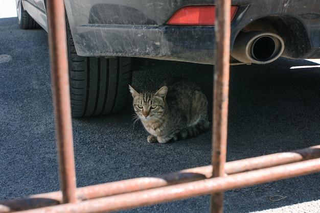 Il gatto sveglio si trova sotto la macchina accanto al silenziatore.