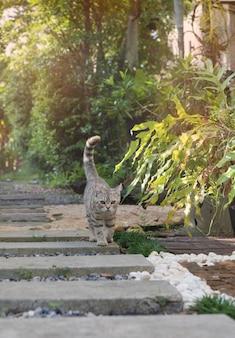 Il gatto tubby sveglio adorabile con i bei occhi gialli cammina sul percorso di pietra in giardino all'aperto