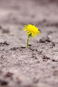 Il germoglio si fa strada attraverso la sabbia