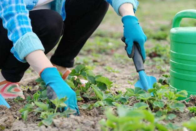 Il giardiniere coltiva il terreno con attrezzi manuali, giardinaggio primaverile