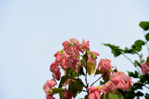 Il giardiniere sta innaffiando i fiori nel parco di long 9 park