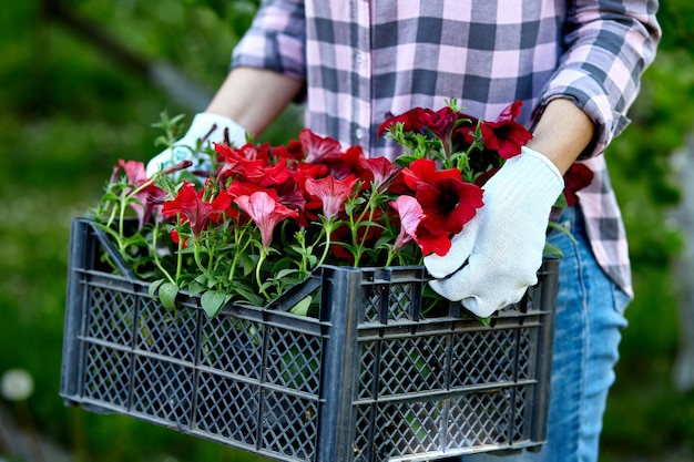 Il giardiniere sta portando i fiori in cassa al negozio.