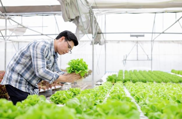 Il giardiniere sta raccogliendo verdure biologiche.