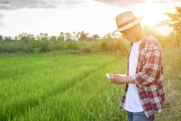 Il giovane agricoltore asiatico che controlla il suo giacimento verde del riso e fa un rapporto sul taccuino