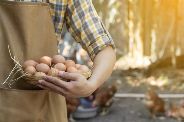 Il giovane agricoltore astuto indossa il grembiule marrone della camicia a maniche lunghe del plaid sta tenendo le uova fresche del pollo nel canestro