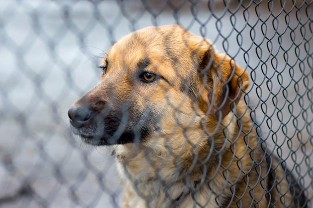 Il giovane cane seduto dietro la griglia guarda avanti, il cane custodisce la casa