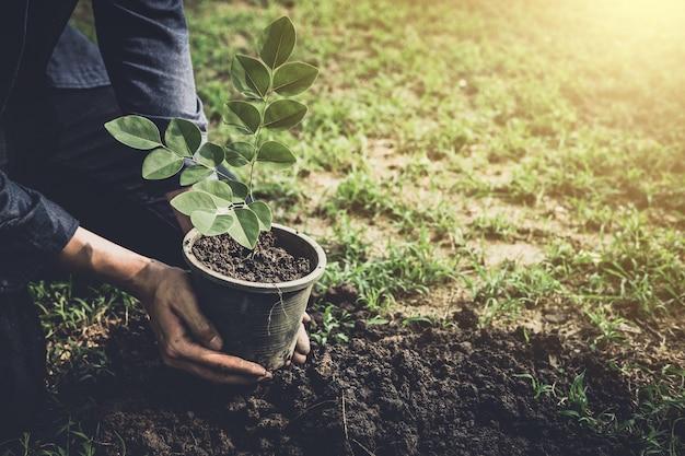 Il giovane che pianta l'albero nel giardino come giorno di terra e conserva il concetto del mondo