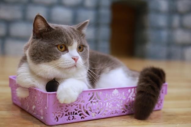 Il giovane gatto pazzo sorpreso fa il primo piano dei grandi occhi.