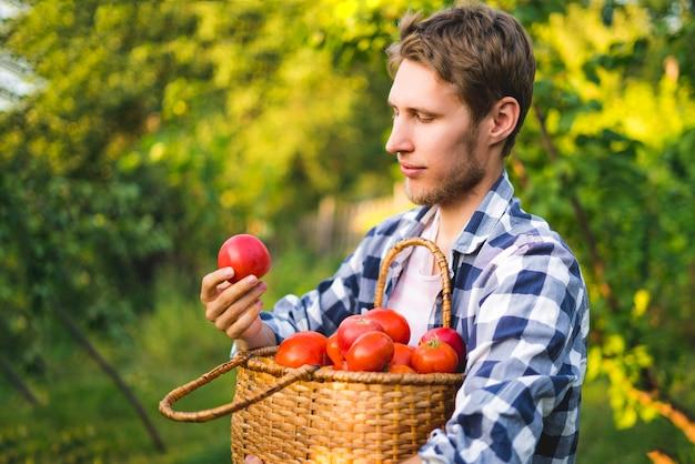 Il giovane giardiniere maschio dell'agricoltore raccoglie la merce nel carrello del pomodoro nell'azienda agricola soleggiata dell'estate