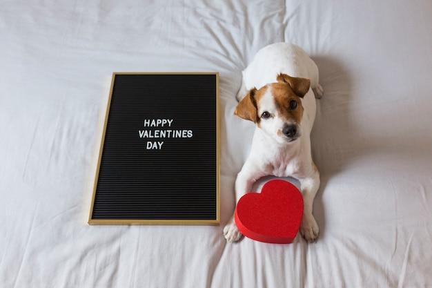 Il giovane piccolo cane sveglio che si siede sul letto con un cuore rosso e una lavagna con il giorno di biglietti di s. valentino felice firmano. concetto. animali domestici al chiuso