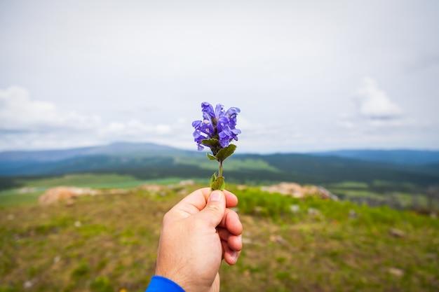 Il giovane uomo del viaggiatore del primo piano tiene in sua mano un fiore viola. fotografie turistiche in montagna