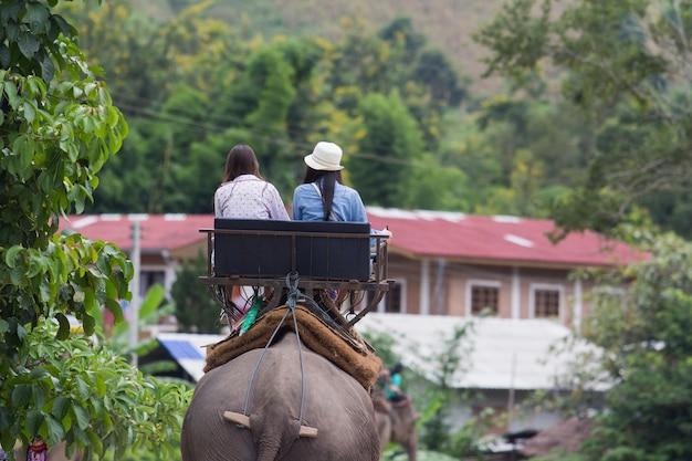 Il giro turistico un elefante in chiang rai, tailandia