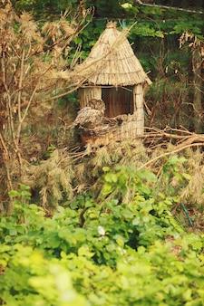 Il gufo si siede su una piccola casa di fieno nel bosco