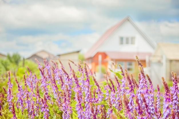 Il letto di fiori contro la casa con fiori viola