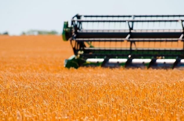 Il macchinario agricolo raccoglie il raccolto giallo del grano nel campo aperto un giorno luminoso soleggiato