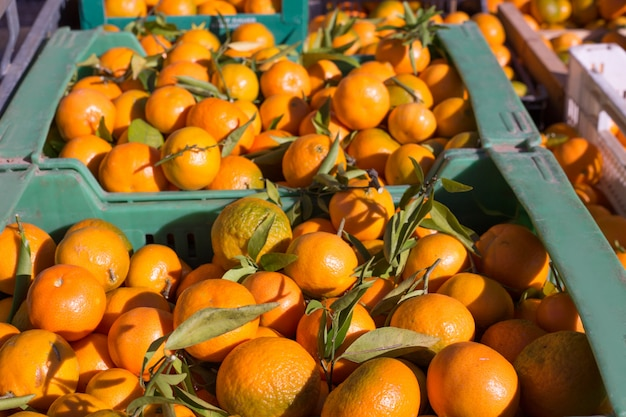 Il mandarino arancio fruttifica nel raccolto in i canestri di fila