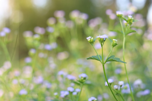 Il mazzo dei fiori rosso-chiaro o del fiore dell'erba si chiude su con il fondo della sfuocatura della natura.