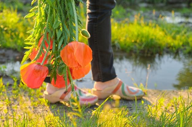 Il mazzo dei papaveri rossi fiorisce in una mano femminile