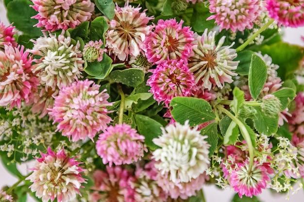 Il mazzo del trifoglio rosa fiorisce il fondo floreale