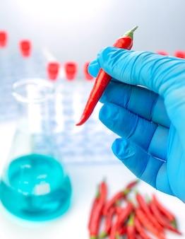 Il medico tiene in mano il peperoncino piccante, test in un laboratorio di analisi
