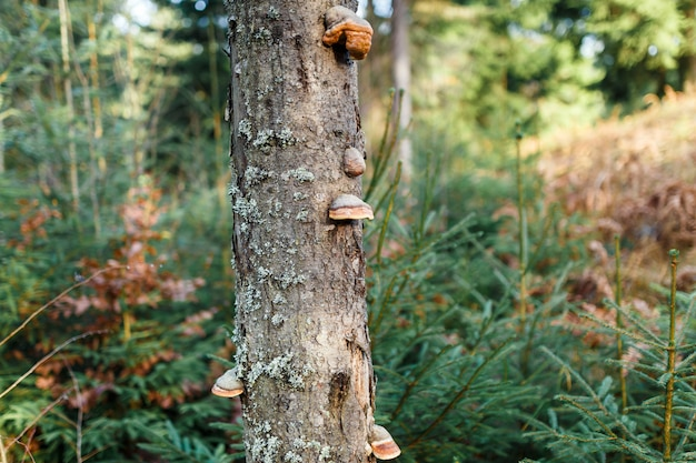 Il meraviglioso paesaggio dell'albero con funghi nella foresta verde