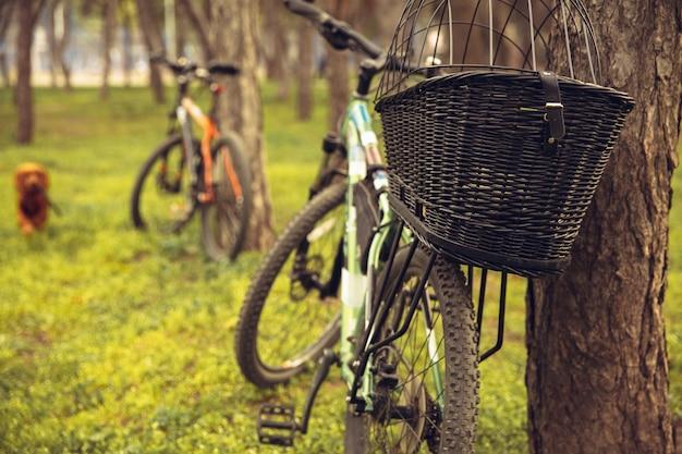 Il migliore amico si diverte vicino al parco di campagna sul mare, in sella a biciclette