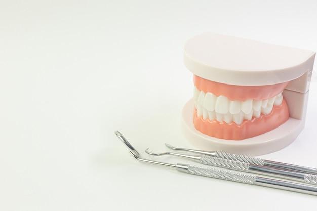 Il modello del dente su sfondo bianco per contenuto dentale.