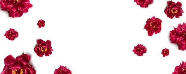 Il modello floreale della peonia rossa fiorisce su bianco